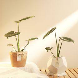 내 생애 첫 식물 몬스테라 화분세트