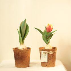 봄을 부르는 꽃 피우는 구근식물 키우기