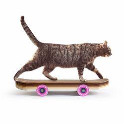 썩유케이 스케이트보드 고양이 장난감 캣 스크래쳐
