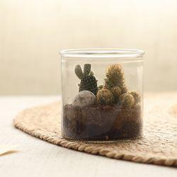 [DIY키트] 솜털이보송 미니 다육식물테라리움만들기