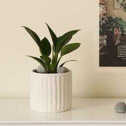 [plant] 콩고 화이트도자기 식물화분set