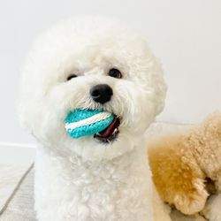 마카롱 삑삑 바스락 장난감강아지 삑삑이 장난감