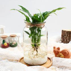 스파트필름 수경재배 키우기 세트 공기정화식물 가습