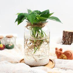 스킨답서스 수경재배 키우기 세트 공기정화식물 가습