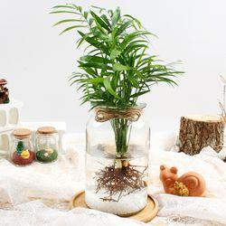 테이블야자 수경재배 키우기 세트 공기정화식물 가습