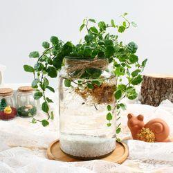 푸미라 수경재배 키우기 세트 공기정화식물 천연가습