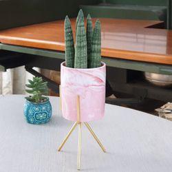 스투키가 심어진 핑크 화분 반그늘식물