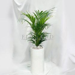 개업화분 개업식물 키우기쉬운식물 아레카야자 테라조화분