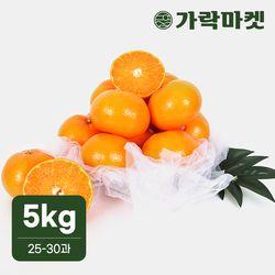 [가락마켓]명품 제주 천혜향 5kg(25-30과)