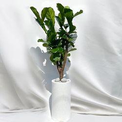 [고급물받침세트] 키우기쉬운 특대형 떡갈고무나무 테라조 화분