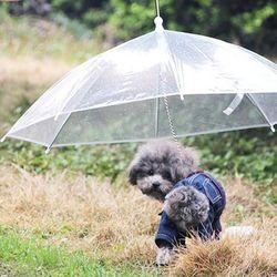 애견우산 강아지우산 비오는날 개우산 애견 산책용품