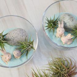 테라리움 만들기 kit 민트모래속 토끼들
