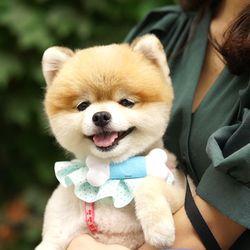 PET MP3 플레이어 PEPPI3 강아지 분리불안 완화