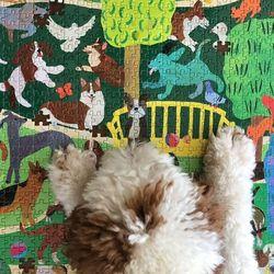 강아지 공원 1000피스 직소퍼즐
