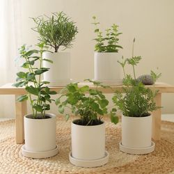 [plant] 향기좋은식물 허브화분 5종