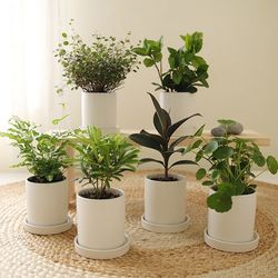 [plant] 초록초록 애완미니식물화분 7종
