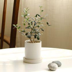 [plant] 나의 작은 올리브나무 식물화분set