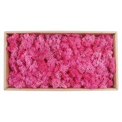 미미네가든 스칸디아모스 핑크색 1박스 (500g) - 가습