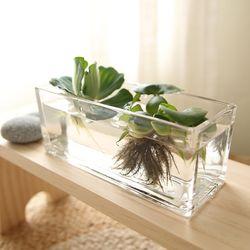 [수경식물] 부레옥잠 물배추키우기세트 (사각수반포함)