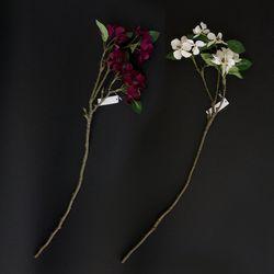 꽃산딸 나무