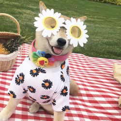 강아지옷 견렌시아가 애견 데이지 꽃무늬 패턴 반팔 티셔츠