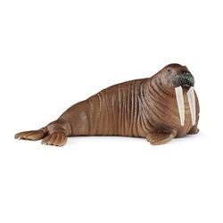 [슐라이히]바다코끼리