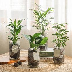 [plant] 공기정화식물 5종 - 수경재배화병세트(10x15)