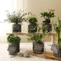 [plant] 공기정화식물 5종 - 수경재배화병세트(10x10)