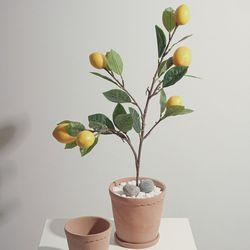 조화 레몬 트리 가지