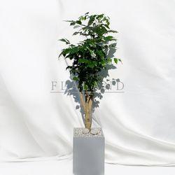 [개업화분] 플라랜드 공기정화식물 대형 녹보수 FRP 시멘트화분