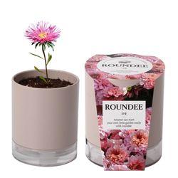 원형화분 라운디과꽃