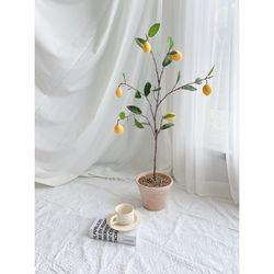 레몬 나무 트리 플랜테리어 스튜디오 카페 홈데코 감성 식물