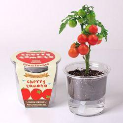 저면관수 식물키우기 - 탱글탱글 방울토마토