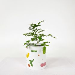 감성인테리어식물 오렌지쟈스민 (소) + 감성 페이퍼 팟 커버