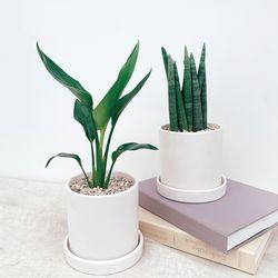 공기정화식물 20종 + 원형화분 (기본포트  풀세트)