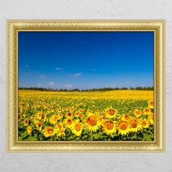 ac901-하늘해바라기밭창문그림액자
