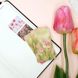 감성 사진 떡메모지 Tulip