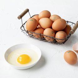 [무료배송] 동물복지 자연방사 유정란 1번 계란 달걀 친환경 무항생제 산지