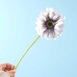 Flower Gerbera 가지 라벤더 55x13cm CH1702058