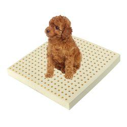 천연 라텍스 애견방석 L5cm+겉커버(50x50x5cm) 고양이방석