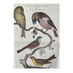 카발리니 일러스트 빈티지포스터 Natural history birds