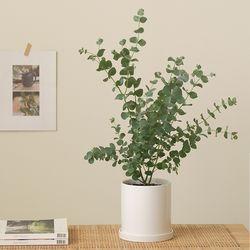 [PLANT] 유칼립투스 모던식물화분