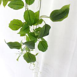 나팔꽃 잎넝쿨 가지