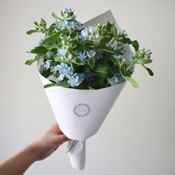 블루옥시 꽃다발