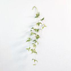 스마일락스 클레마티스 인조나무가지 넝쿨 덩쿨 식물 가랜드