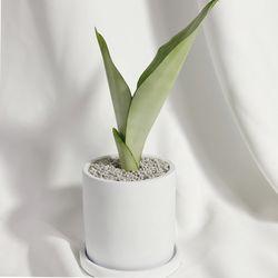 문샤인 중형 시멘트화분 공기정화식물 다육이 산세베리아