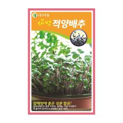 새싹적양배추씨앗 12g 새싹적양배추 새싹채소씨앗