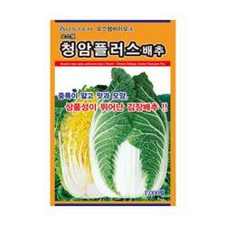 청암플러스배추씨앗 1000립 가을배추 김장배추 씨앗