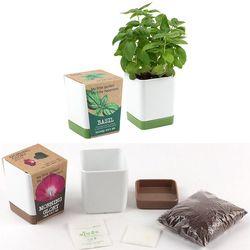 반려식물키우기 바질씨앗 흙 화분세트