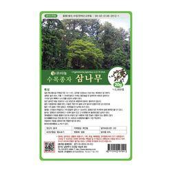 수목종자 삼나무씨앗 20g 삼나무종자 산림조경